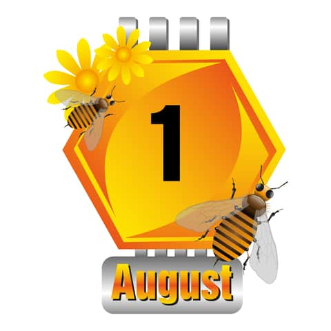 Bee-cause it is August!
