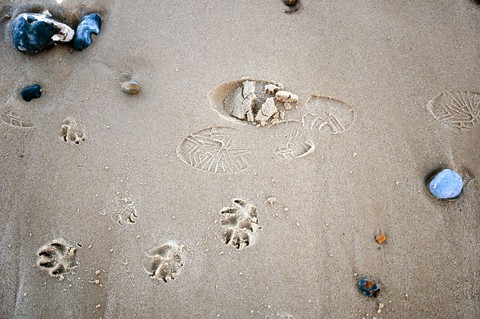 Footprints (& pawprints)