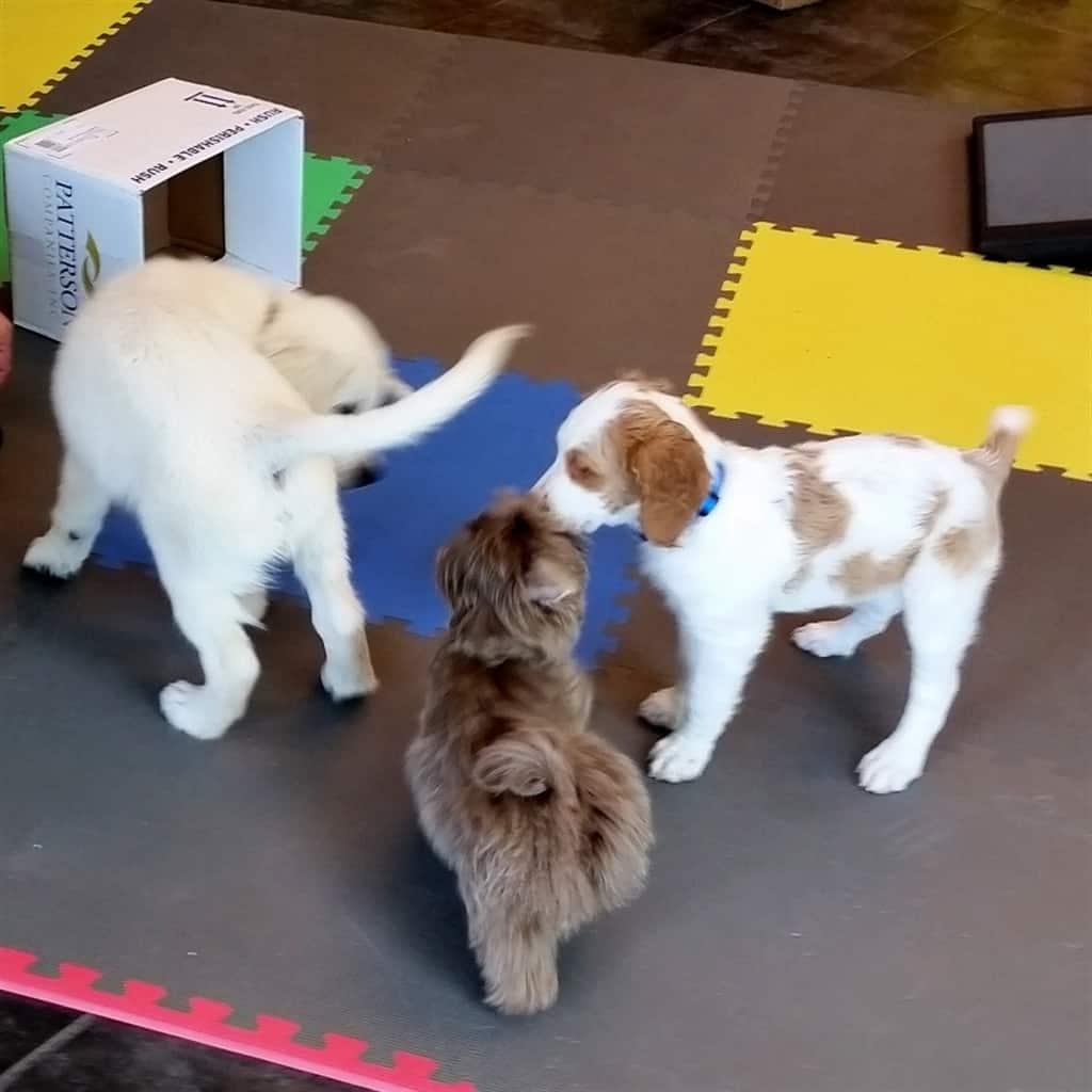Cooper Puppy Kindergarten Mailbox Letter