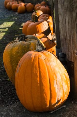October 2016 AnchoredScraps Daily Blog Recap