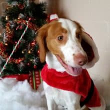 Christmas in July Santa Paws Letter Writing